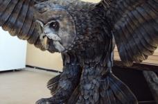 owl_5